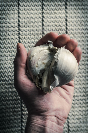holding close: Extra large elephant garlic clasped in hands with moody lighting for farmers background photo