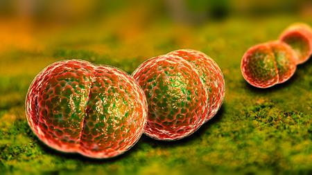 neisseria: 3D microscope close up of meningitis bacteria, also known as meningococcus