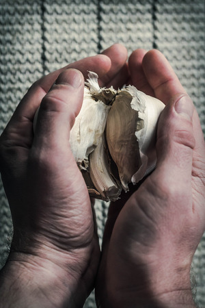 extra large: Extra large elephant garlic clasped in hands with moody lighting for farmers background photo