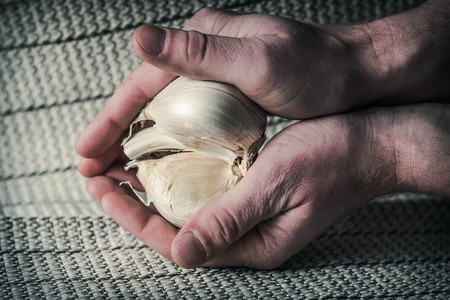 Extra large elephant garlic clasped in hands with moody lighting for farmers background photo