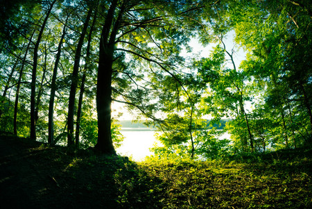 Down at the lake at the golden hour with summer tree leaves Banque d'images
