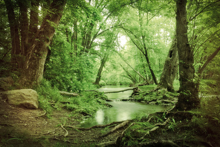 Magische zomer moeras diep in het bos met scheve eikenbomen creëren tunnel