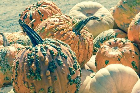 cucurbita: Hybrid Cucurbita pepo knucklehead pumpkin display at local farmers market