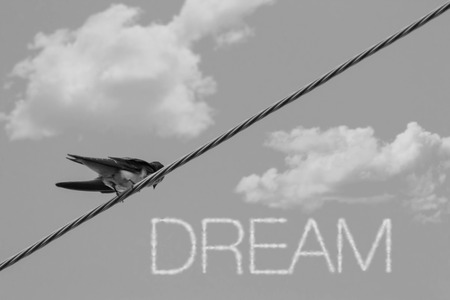 inspiring: Inspiring sparrow on telephone wire - clouds say Dream Stock Photo
