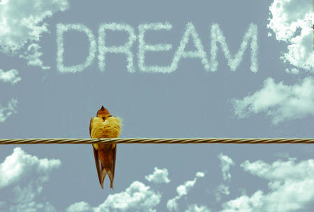 jet stream: Inspiring sparrow on telephone wire - clouds say Dream Foto de archivo