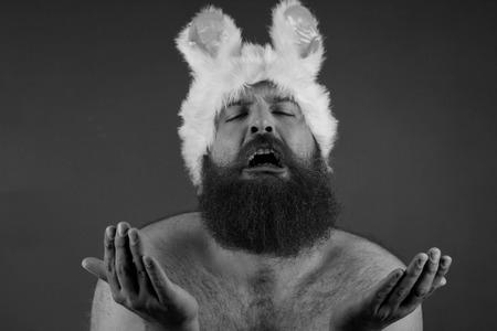 Pleading bearded fat man wears silly bunny ears