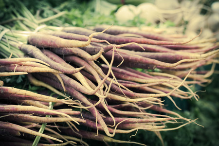 carots: Organic heirloom carrots in yellow red orange and purple