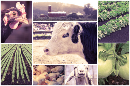 imagery: Mosaic of farm animals and agricultural imagery in collage imagery
