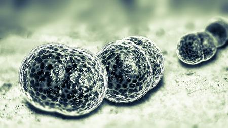 bacterial meningitis: 3D microscope close up of meningitis bacteria, also known as meningococcus