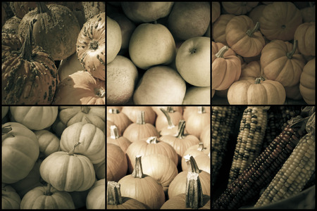 pumkin: Seasonal fruits and vegetables of Autumn for holiday collage image Stock Photo