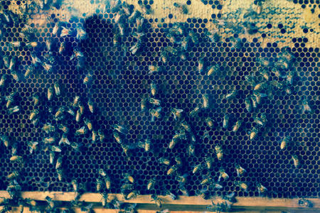 Closeup of worker bees in cross section of beehive display