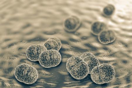contagion: 3D microscope close up of meningitis bacteria, also known as meningococcus