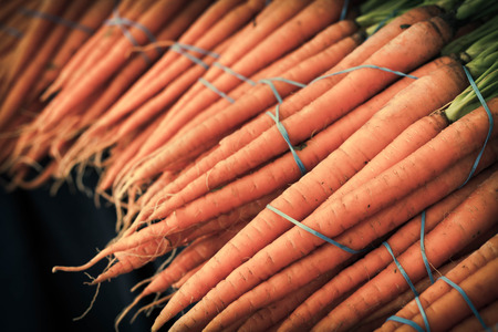 harvest organic: Bunches of organic carrots with green stems attached grown locally
