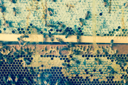 worker bees: Closeup of worker bees in cross section of beehive display