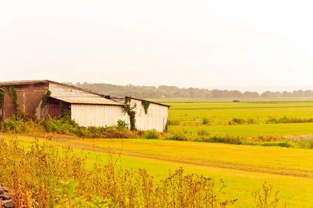 humid: overcast humid summer day barn overgrown