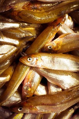 sardinas: Pila de sardinas frescas crudas en un mercado de mariscos