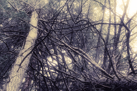 gnarled: Gnarled and spooky, mysterious tree branch texture