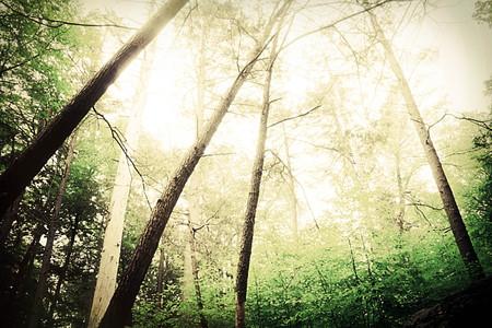 daylight: Trees reach to the sunny daylight