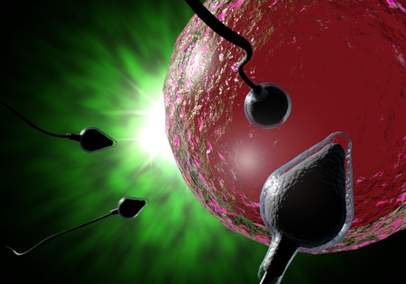 Piscine course des spermatozoïdes à féconder un ovule humain fertile Banque d'images - 50795221