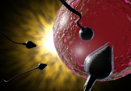 Natation course de sperme pour imprégner un oeuf humain fertile Banque d'images - 50795383