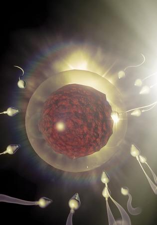 Swimming sperm race to impregnate a fertile human egg