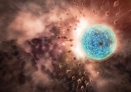 Natation course de sperme pour imprégner un oeuf humain fertile Banque d'images - 50909365
