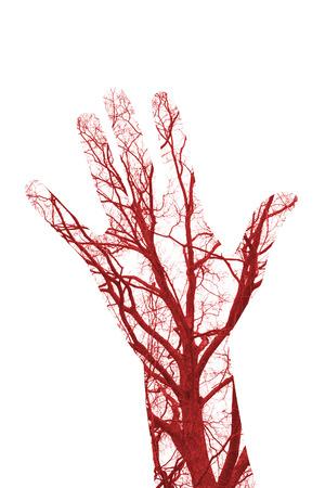 vasos sanguineos: Cerrar los vasos sangu�neos humanos en la mano masculina
