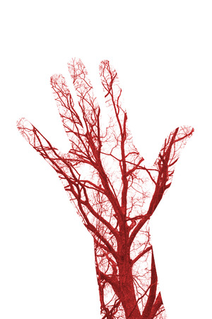 Close up human blood vessels in male hand Banque d'images