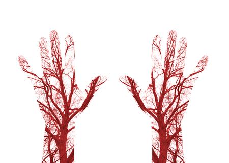 globulo rojo: Cerrar los vasos sanguíneos humanos en la mano masculina