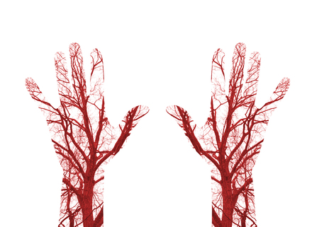 blood flow: Close up human blood vessels in male hand Stock Photo