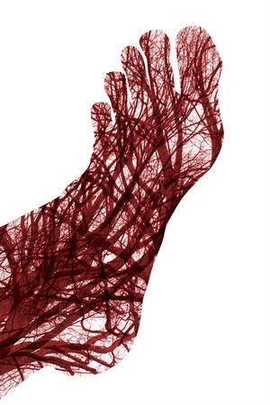 globulos blancos: Cerrar los vasos sanguíneos humanos en pie masculino Foto de archivo