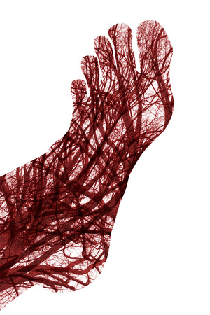 Close up human blood vessels in male foot