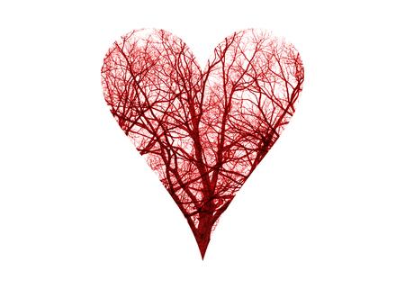 globulos blancos: Cerrar los vasos sanguíneos humanos en el símbolo del corazón