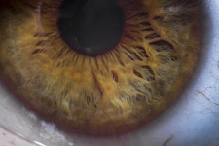 extreme close up: Macro extreme close up human eyeball background