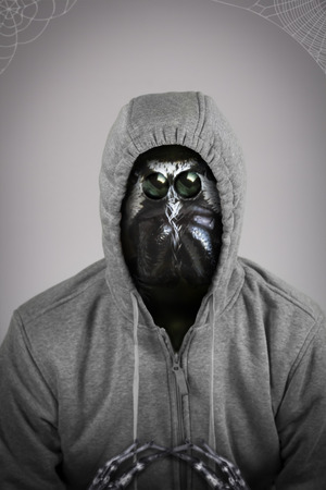 hooded shirt: Scary spider monster man in hooded shirt, Anthropomorphic mutant Stock Photo
