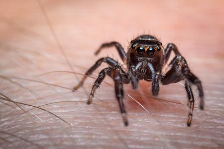 arachnophobia animal bite: Super macro close up jumping spider on human skin Stock Photo