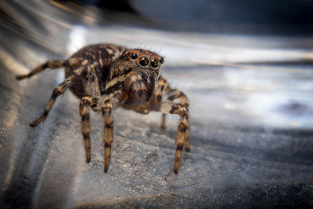 jumping spider: Super macro close up jumping spider on glass surface Stock Photo
