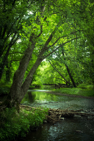 mood moody: Magical summer swamp deep in the forest with leaning oak trees creating tunnel