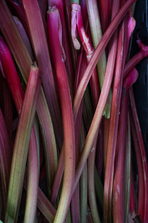 rheum: Fresh organic rhubarb stalks at local farmers market