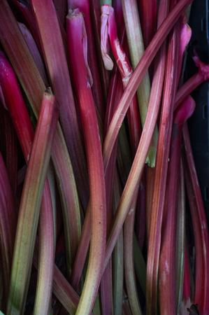rheum: Fresh organic rhubarb stalks at local farmers market