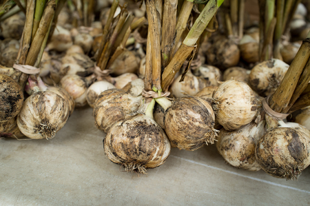 bulb and stem vegetables: Close up dirty garlic display with stems at farmers street market Stock Photo