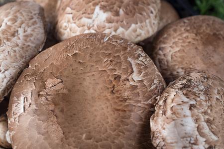 common market: Closeup pile of common portobello mushrooms at local farmers market Stock Photo