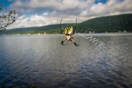 arachnophobia animal bite: Close up yellow garden spider on web in its natural habitat Stock Photo