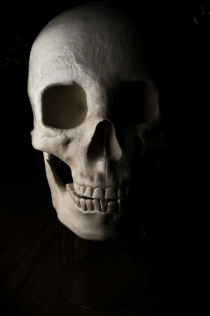 terrifying: Terrifying realistic halloween skull for October holiday background