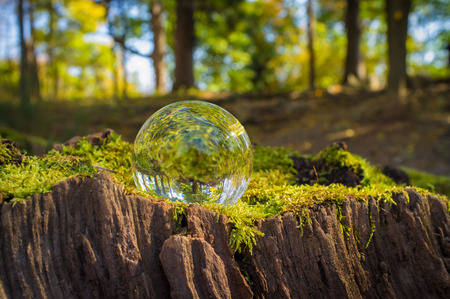 Magic crystal ball on tree stump moss for autumn fantasy imagery