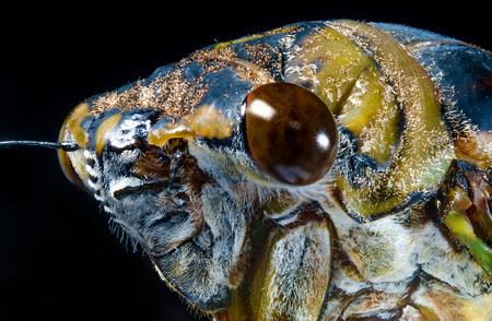 Closeup macro cicada locust for pest control and farming image Imagens