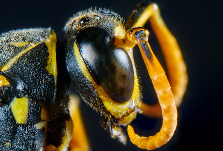 Extreme close up macro scary paper wasp eyes Reklamní fotografie