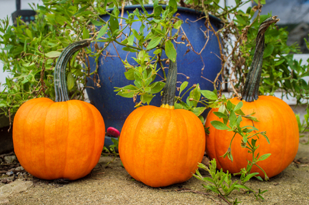Seasonal autumn orange pumpkins decorating front steps Stock fotó