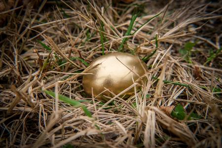 Golden egg idiom concept in spring grass nest Reklamní fotografie