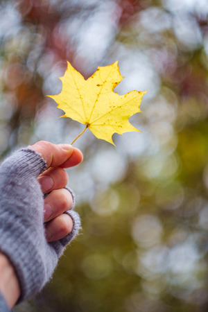 Hand wearing fingerless gloves holds up yellow autumn leaf with creamy background bokeh